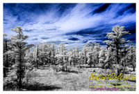 cypress_swamp_new_orleans_infrared_scenes_jm_040613_001