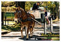 prytania_horse_and_carriage_jm_021613_001