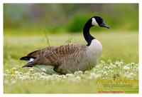 feathered_friends_jm_032313_002