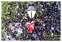new_orleans_christmas_blizzard_jm_121108_005
