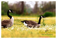 feathered_friends_jm_032313_001
